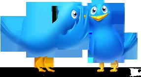 twitter birds icon