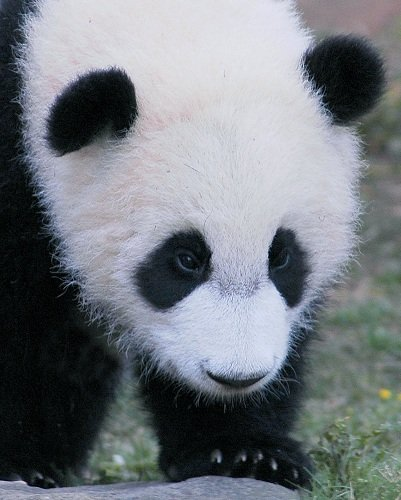 Google Panda update and SEO