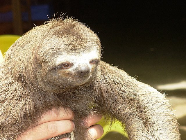 Dirty sloth pictures - photo#20