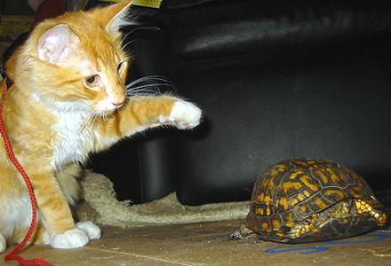kittyturtle