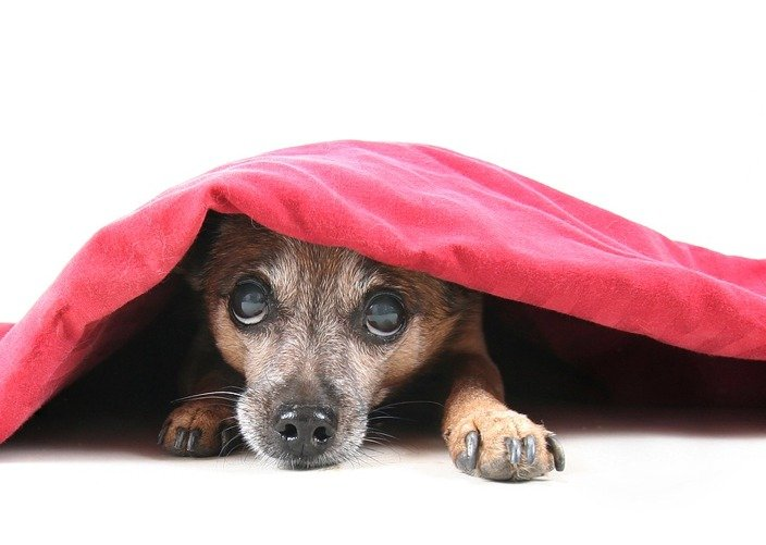 WordPress Hide Page Title - Featured Image: Dog Under Blanket