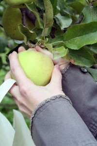 WordPress Marketing - Low Hanging Fruit