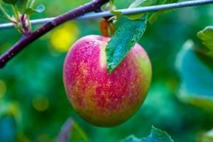 WordPress Marketing - Low Hanging Fruit