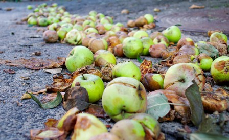 A bunch of rotten apples