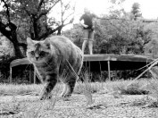 Trampoline cat