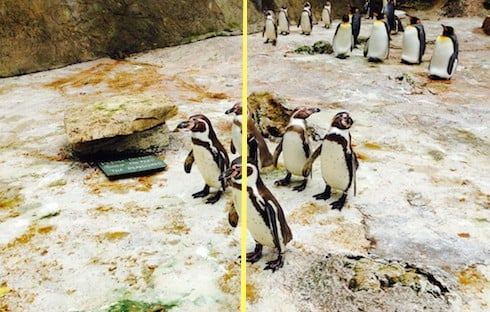 Image of penguins to compare jpg compression.