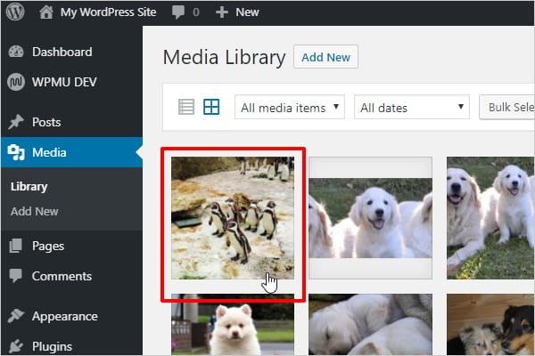 Screenshot of image selected in WordPress media library.