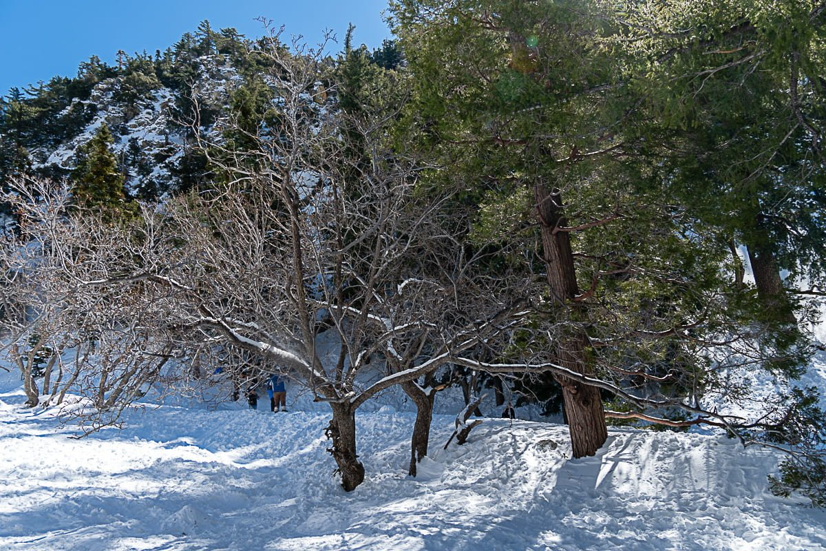 Retina Image of Tree