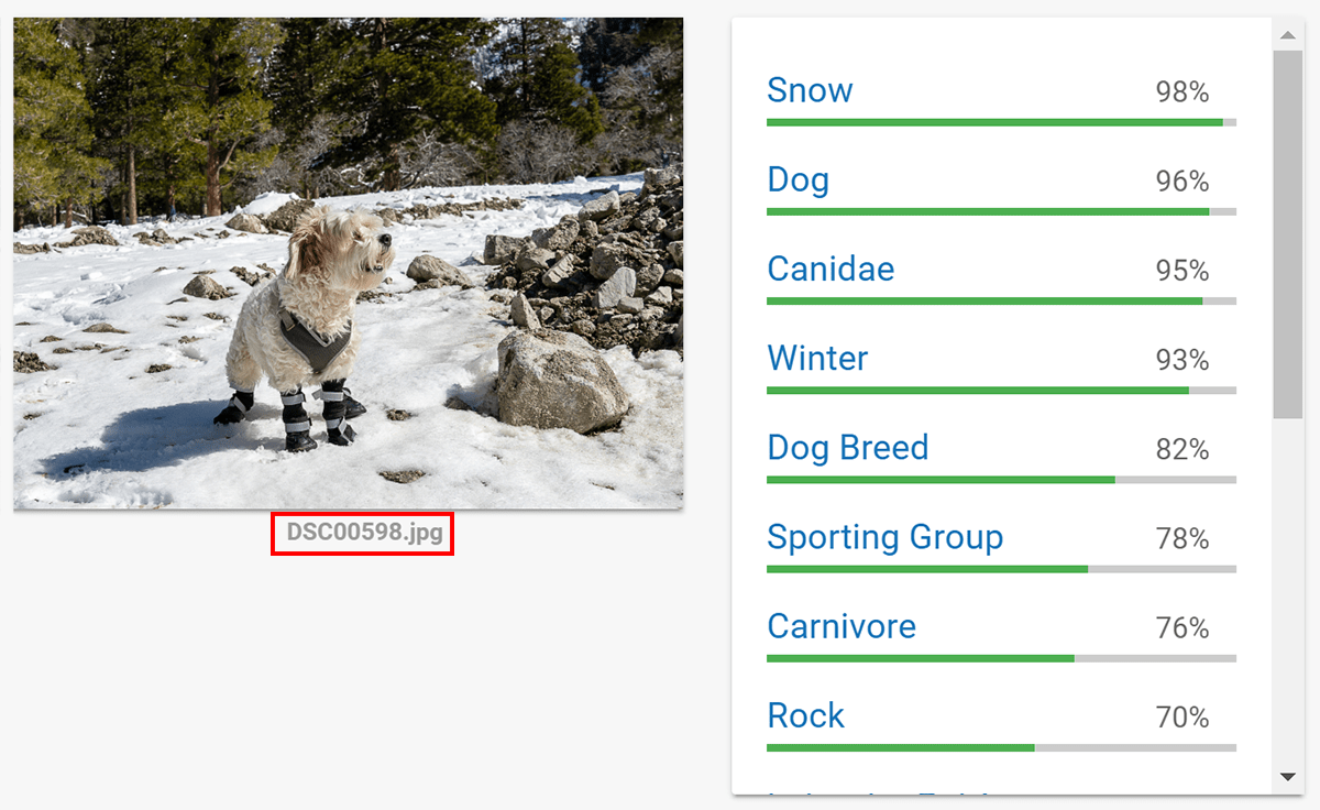 Photo of dog in snow, keyword guesses