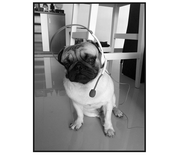 Image of a dog wearing a headset, styled using CSS and the image post format