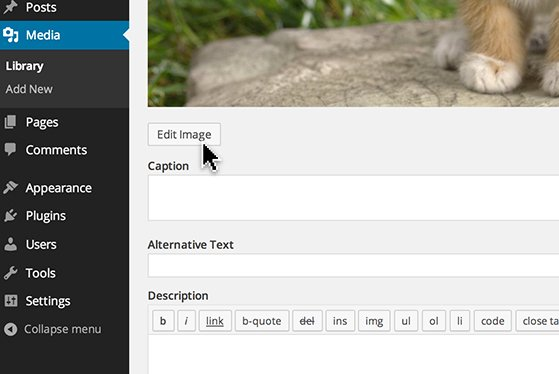 Click the 'Edit Image' button to be taken to the 'Image Editor'.